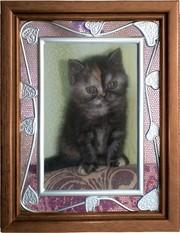 За смешные деньги продам котенка. Качественный. Почти не юзаный
